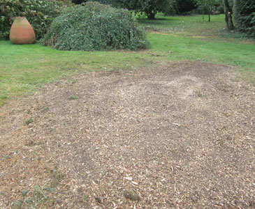 After grinding, ground level after being filled with mulch and wood chips from stump