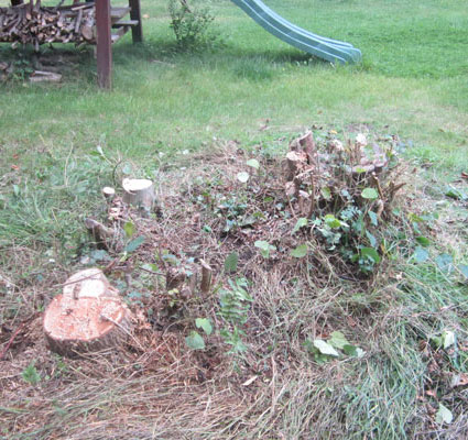 Group of tree stumps before grinding in private garden