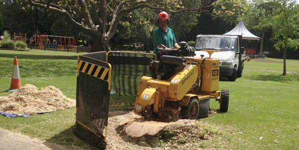 tree stump grinding public gardens