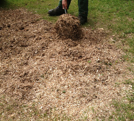 After grinding, wood chips and mulch to fill in the hole