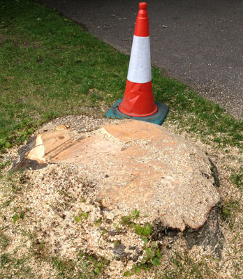 Tree stump removal in public gardens - before